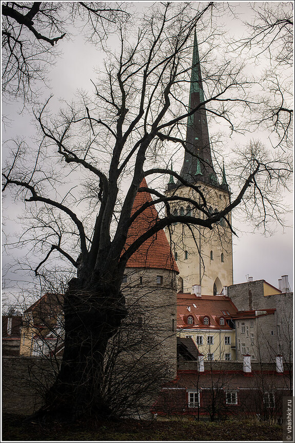 Дерево-осьминог нападает на башни.