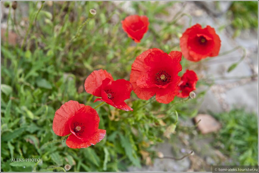 Напомню, что сейчас май месяц и мы находимся в Эль-Джадиде на берегу Атлантики. Очень приятным сюрпризом было увидеть здесь вот эти прелестные цветы. Думаю, их сюда занесло ветром откуда-то с гор...