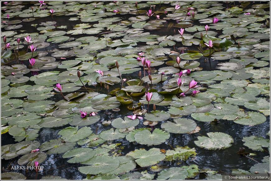 """В буддизме лотос - символ чистоты. Здесь цитирую: """"Лотос рождается в мутной болотной воде, однако появляется на свет незапятнанным и чистым. Подобно этому """"существа, рожденные в одном из миров сансары, но искренне практикующие учение Будды, способны со временем избавиться от омрачений...""""."""