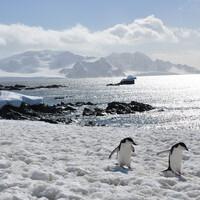 По снегам Антарктики