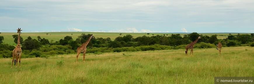 Жирафы в интерьере