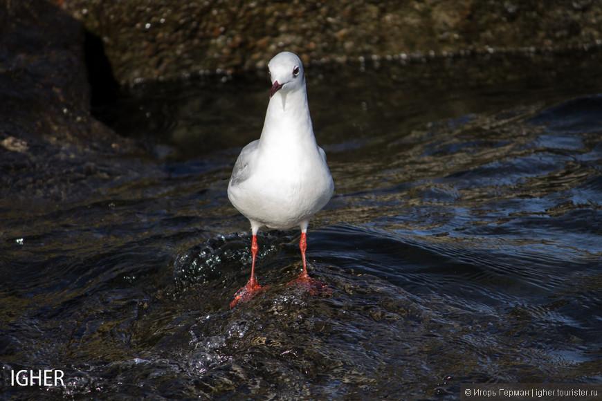 озерная фауна