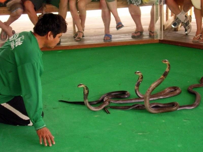 Доставка ферма змей в паттайе 2000-м
