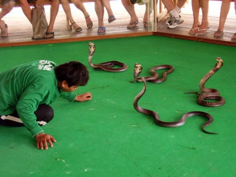 поэтому ферма змей в паттайе намокает, это