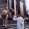 На день Св. Франциска в собор Св. Ионна приводят очень разных животных, включая слонов и верблюдов