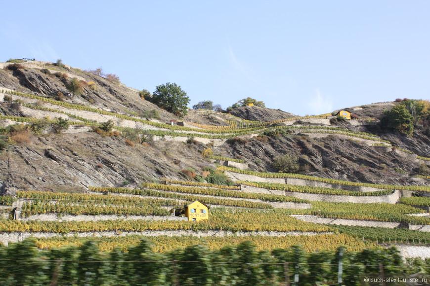 Виноградники северных склонов. Желтым покрашены домики обходчиков.