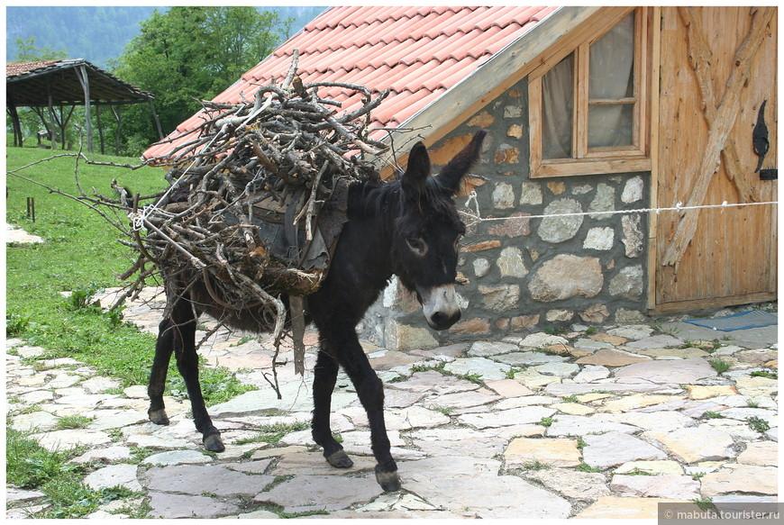 Трогательный черный ослик везет на себе  «хворосту воз» для вечернего костра.