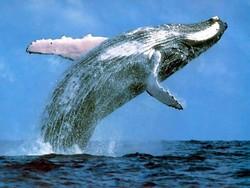 Китов и дельфинов покажут в Брюсселе