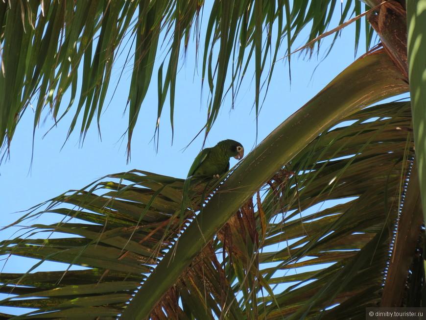 А-а-а, и зеленый попугай!