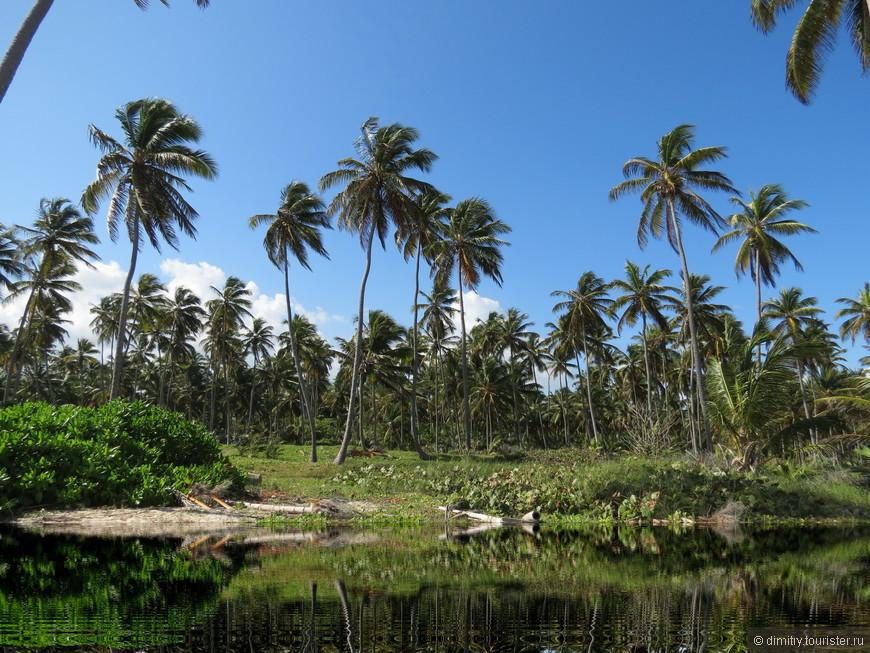 El Mangalor. По-нашенски, просто джунгли. Остался еще маленький, нетронутый цивилизацией кусочек.