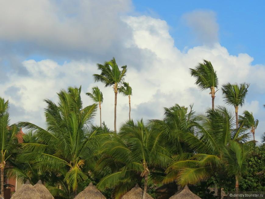 И только пальмы шелестят. И шепчут: --- Выпить и спать...