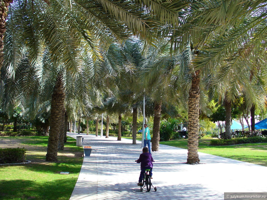 Сразу же от центрального входа в парк начинается широкая пальмовая аллея.