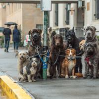 Представляете, у всех этих собак одна хозяйка! Это каким же одиноким человеком надо быть...