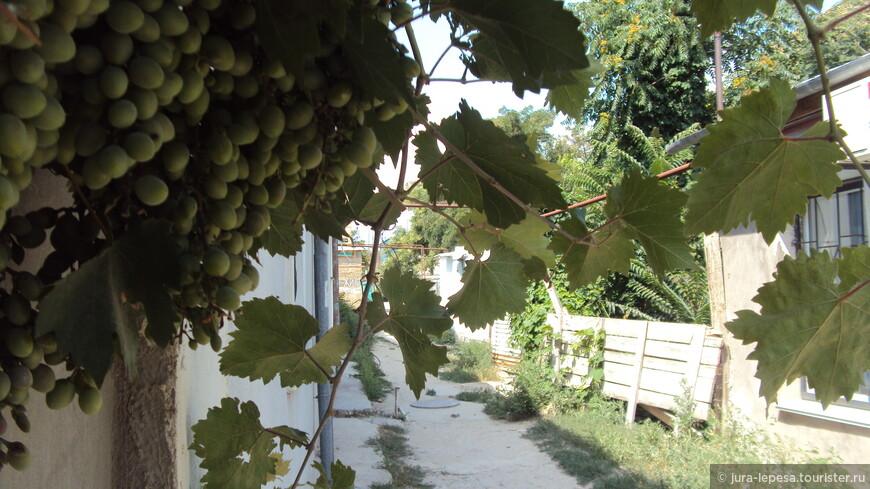именно такой мне и представляется курортная улица-виноград, Солнце и полно свободного времени