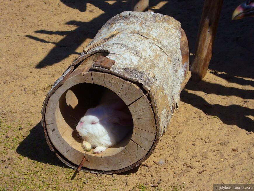 У кролика обеденный сон.