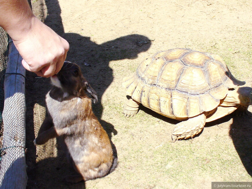 Уж кого-кого, а кроликов кормить совершенно не страшно!
