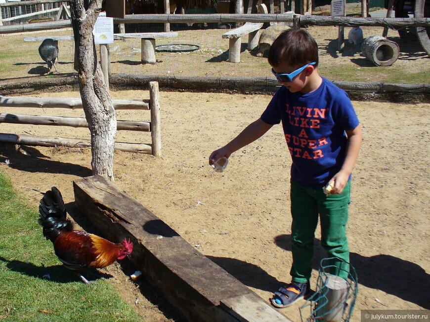 Нашему ребенку почему-то больше всего понравилось кормить кур и уточек.