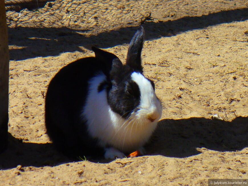 Кролик обедает.
