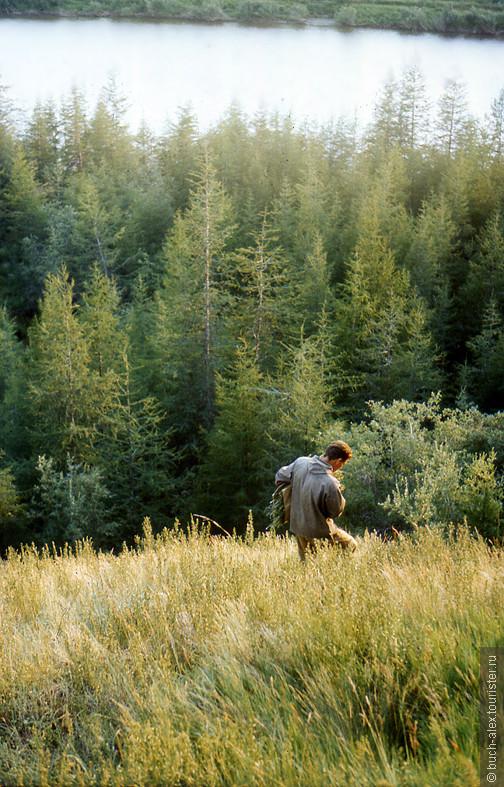 На берегах Колымы в районе поселка Черский растут в большом разнообразии ценные лечебные травы. Так сейчас ищем Арнику.