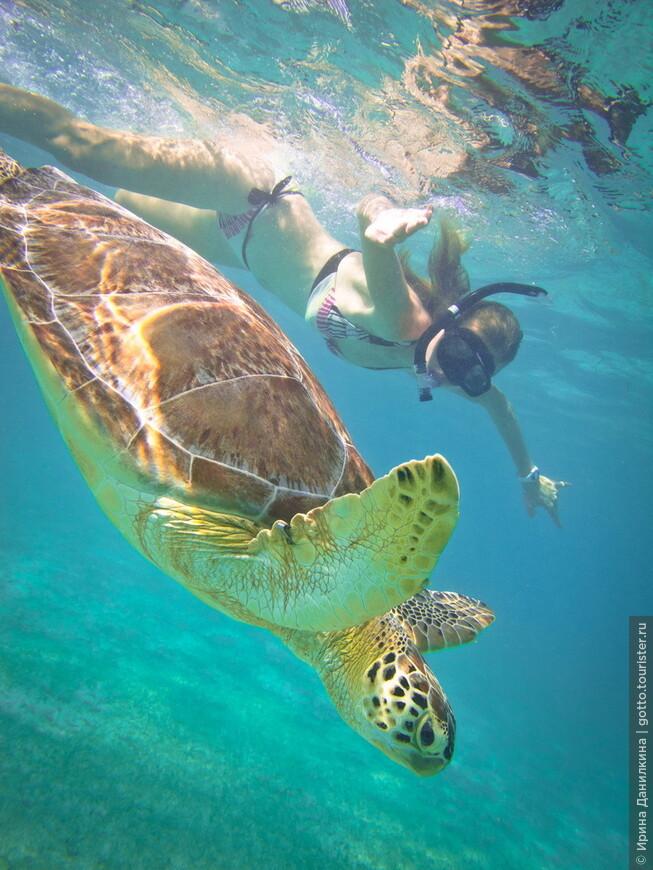 Плавание с огромными черепахами в их естественной среде