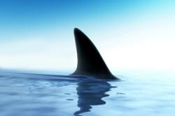 В Шарм-эль-Шейхе на туристку из Литвы напала акула