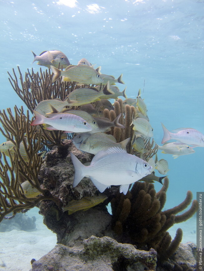 Коралловый риф в Мексике - второй по величине в мире. после Большого Барьерного рифа в Австралии - является домом для сотен видов рыб и других морских организмов.