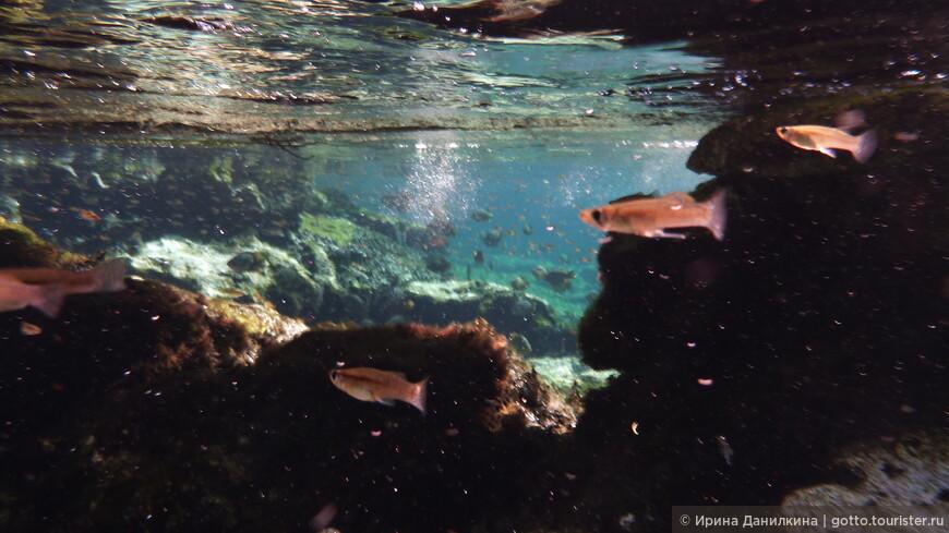 Открытые сеноты становятся домом для пресноводных рыб и водных растений