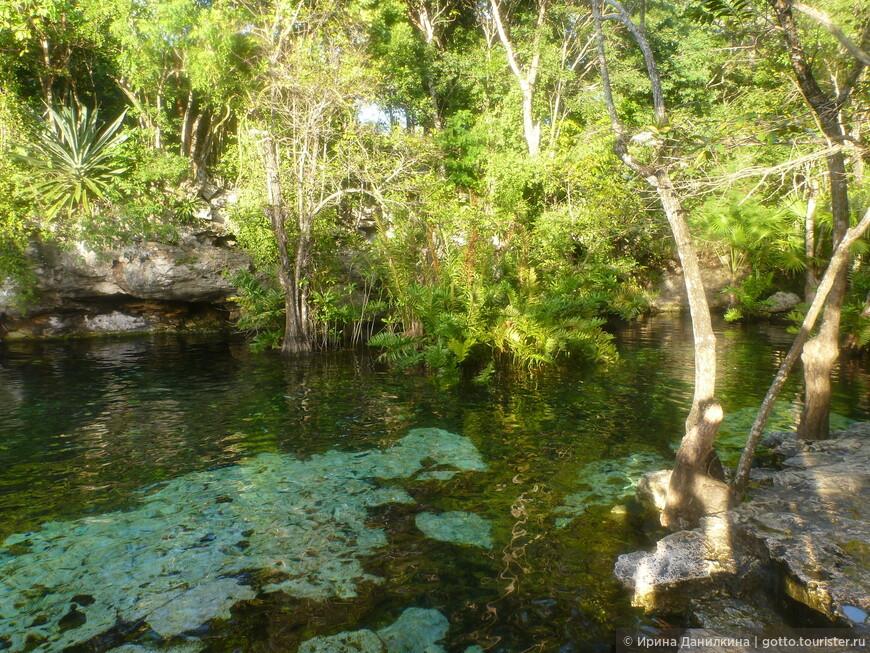 Некоторые сеноты похожи на обычные озера, однако отличаются от последних кристально чистой водой.