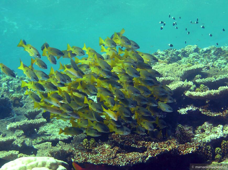 дальше я думаю подписывать смысла нет. Просто подводный мир Красного моря.