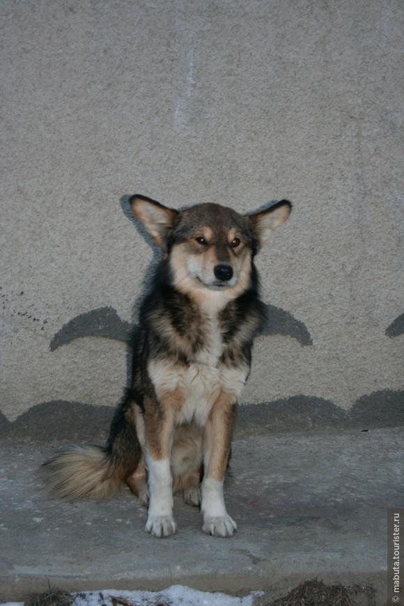 Крылатый пёс!))