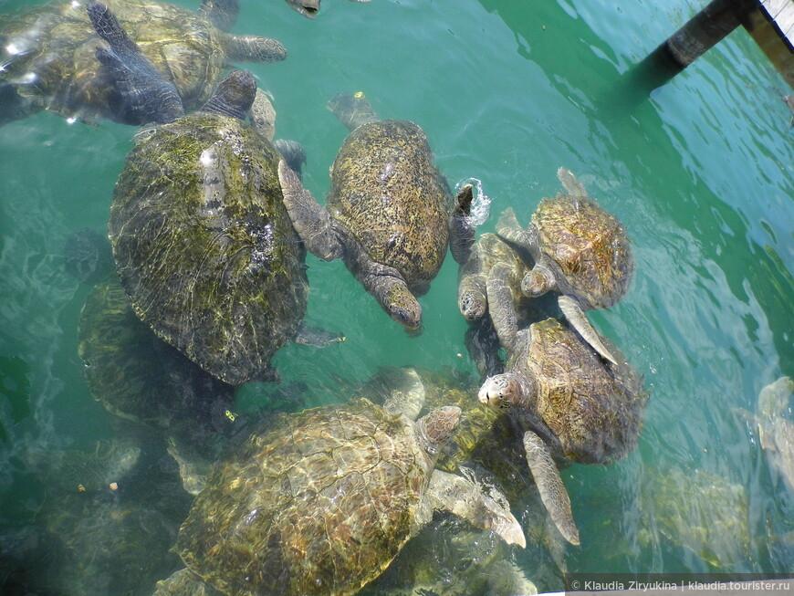 Черепахи просто очаровательные!