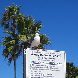 Venice Beach. Непосредственно Бич