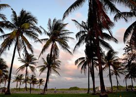 Пальмы на закате.