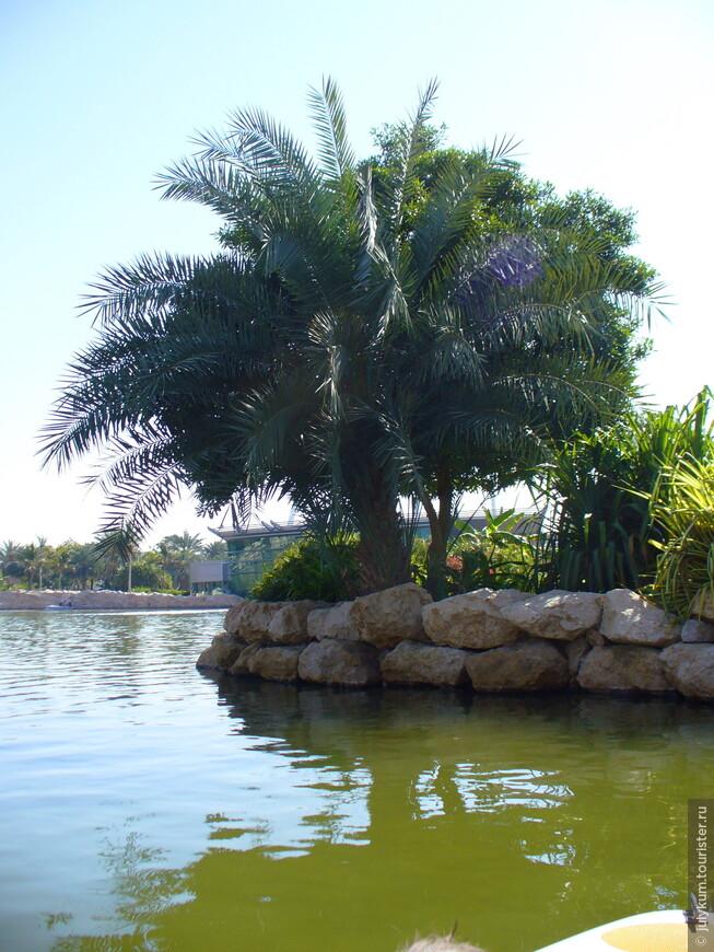 ... и пальмы.