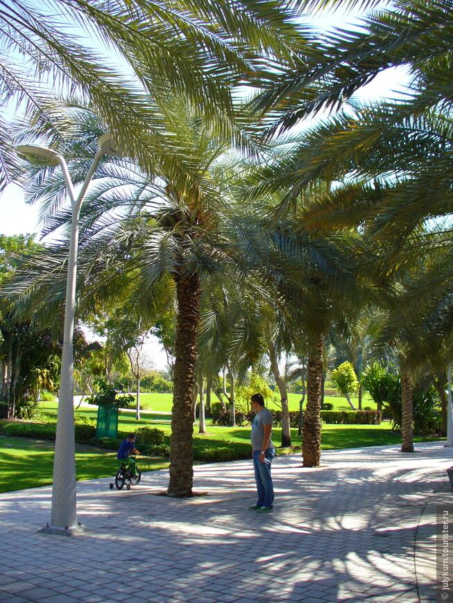 Пешеходные дорожки затенены пальмами.