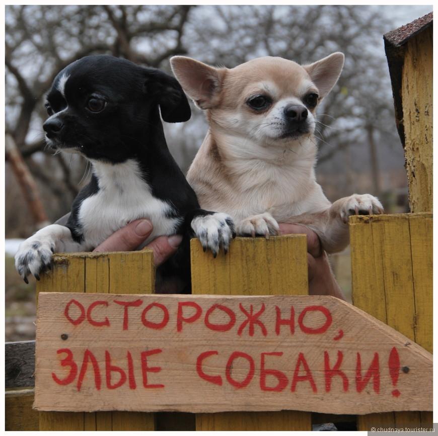 Но в деревне живут люди с хорошим чувством юмора, а значит всё будет ХА-РА-ШО