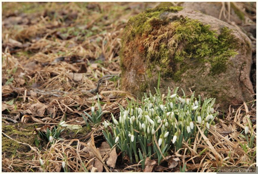 Хочется верить в Весну и Чудо Возрождения.