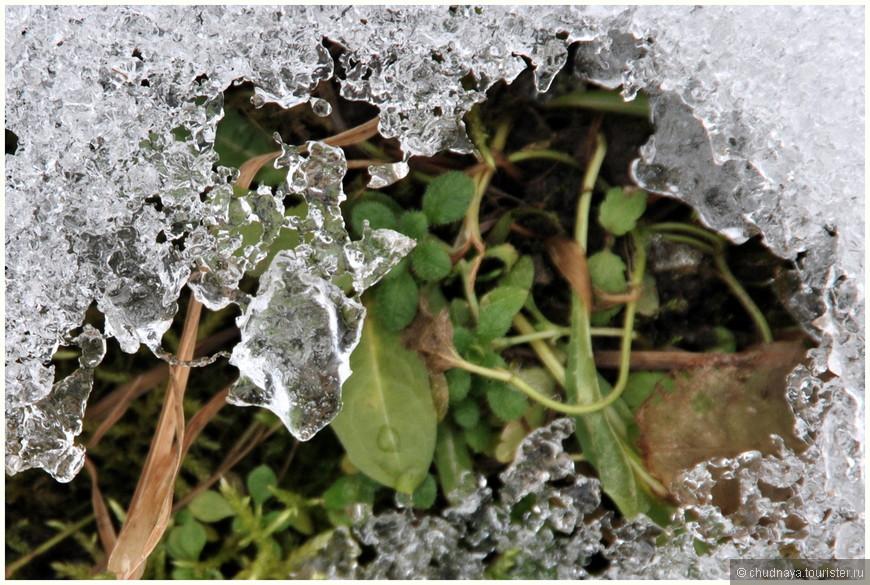Под равнодушным снегом уже пробиваются новые ростки.