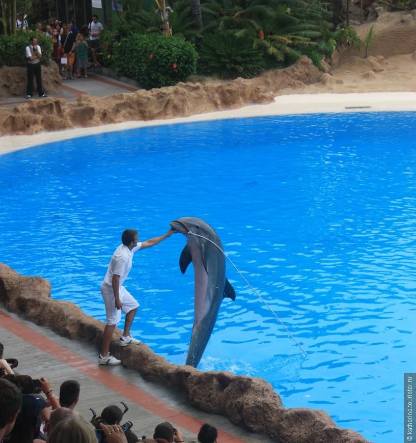 Шоу дельфинов в Лора-парке