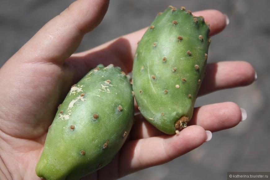 Собственно, сами кактусы, которые можно почистить и съесть