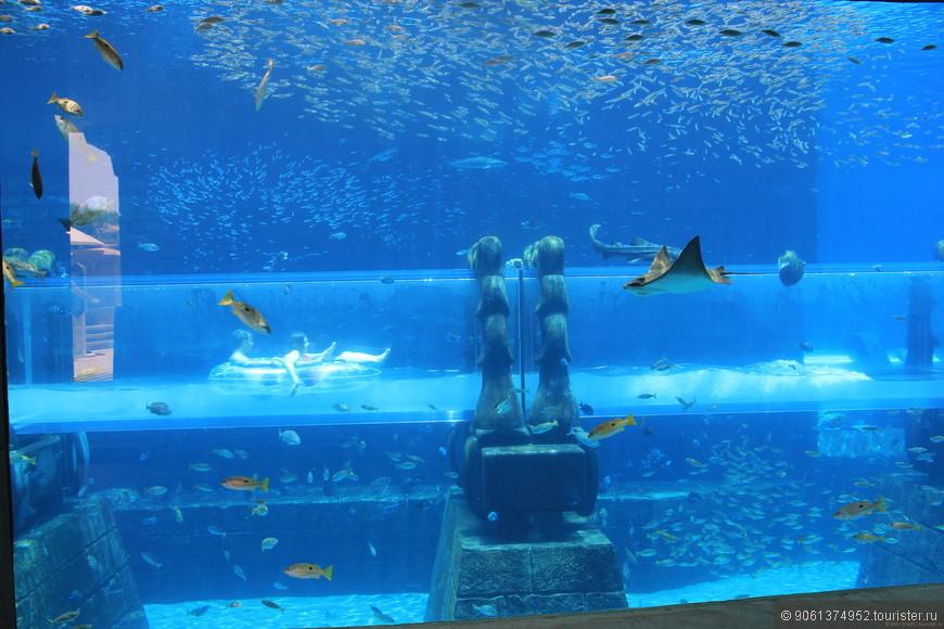 После стремительного спуска по одной из горок течение уносит лодку в трубу, течение медленное можно насладиться морскими обитателями изнутри аквариума.