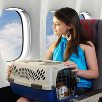 В Берлине планируют ввести налог на путешествующих с туристами собак