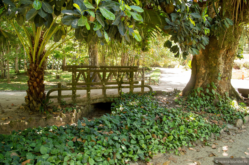 в парке много лавочек, на которых приятно отдохнуть в тени раскидистого тропического дерева