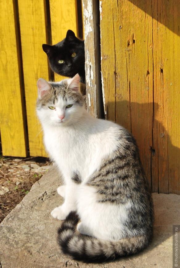 На чердаке будущего музея живут кошки. Они охраняют ценные экспонаты от мышей.