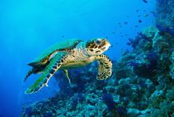 Восточный Тимор борется за экологию