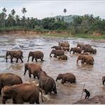 srilanka_0330.jpg