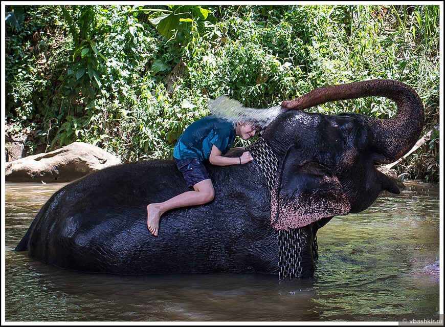 Пиннавеле. Сначала дети купали слона, теперь слон купает Филиппа! ))