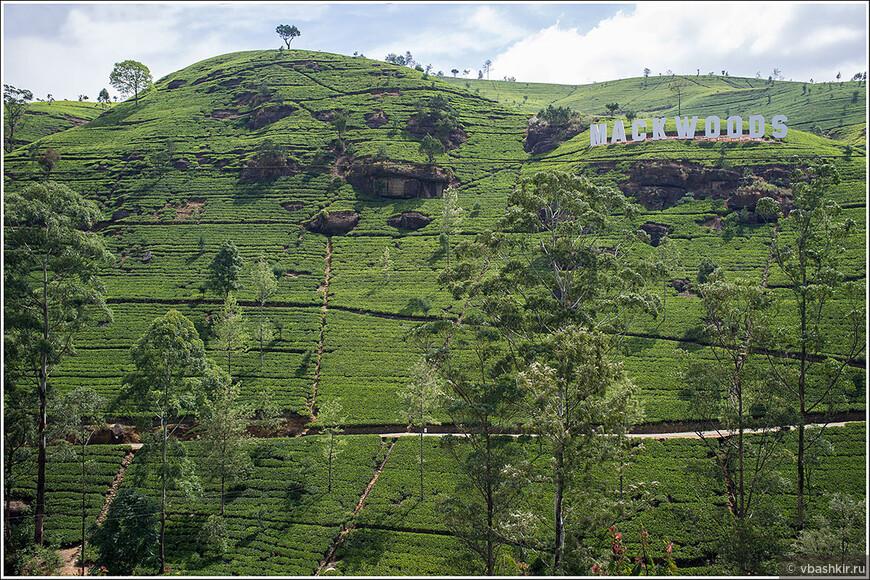 Чайные плантации Mackwoods.