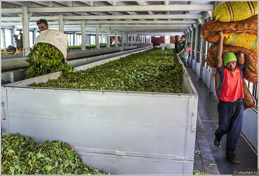 На чайной фабрике Mackwoods.
