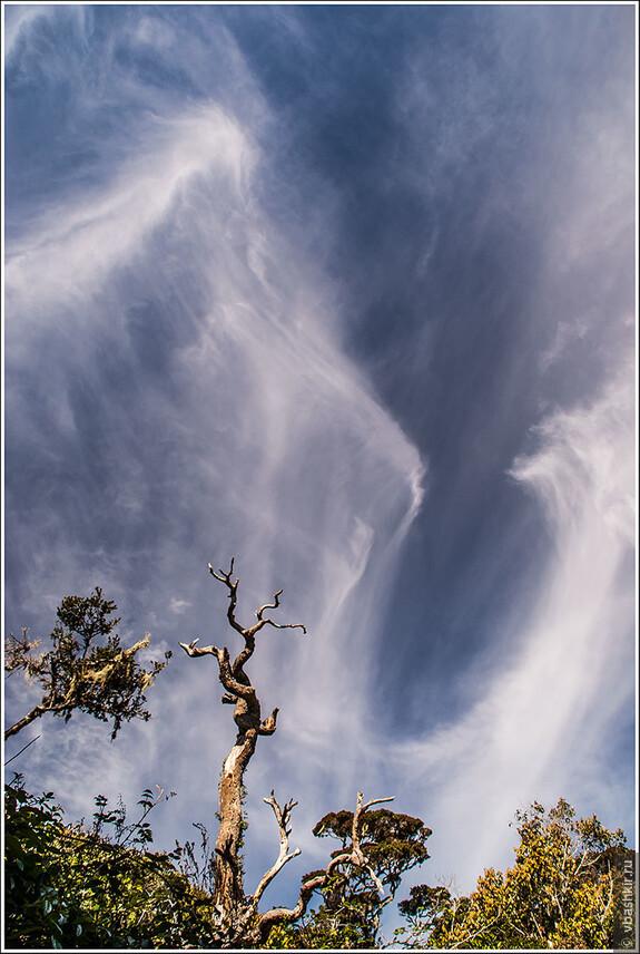 Танцы ветвей и облаков. Horton Plains